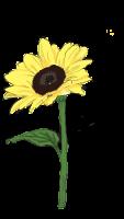 Valentine-Sonnenblumen