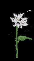 Valentine-Orchideen
