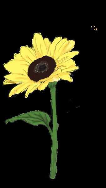Valentine Sonnenblume